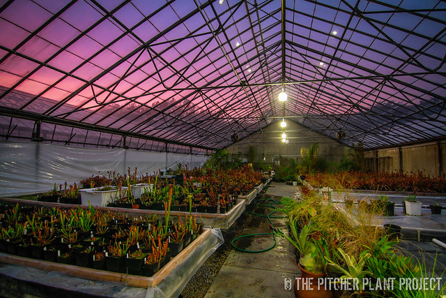 Greenhouse Sunset