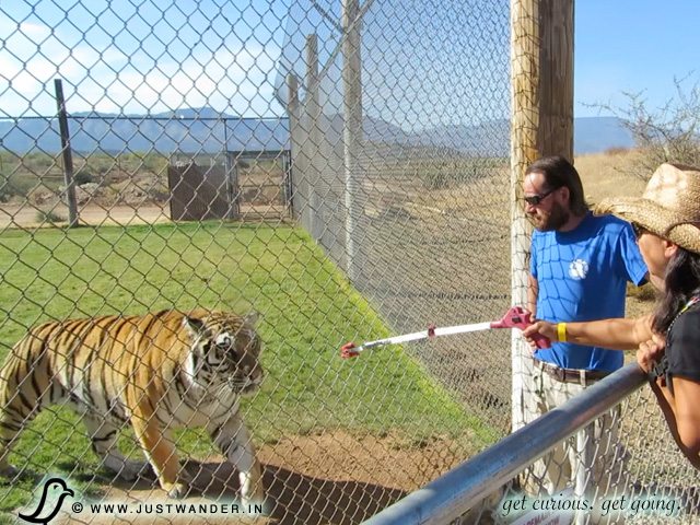 PIC: Out of Africa Wildlife Park - Maya feeding the Tiger