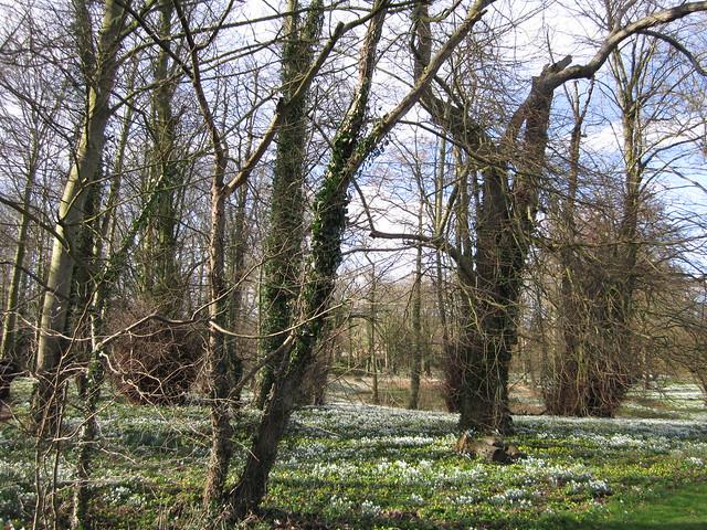 snowdrop walk Walsingham Feb 2014 (25)