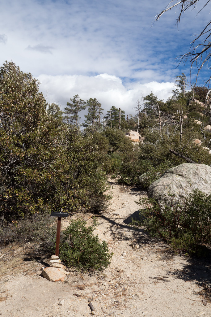 1402 Guthrie Mountain Trail at Bear Saddle