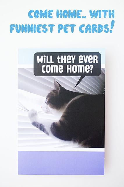 Hallmark Funny Pet Cards_6