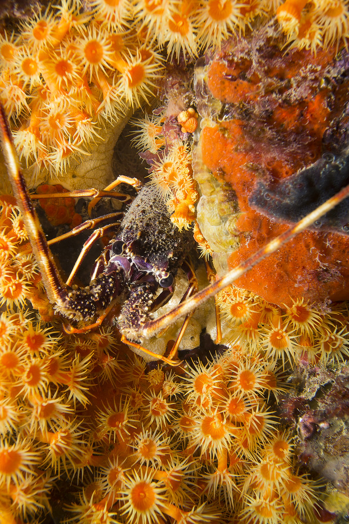 En el jardin de anemonas en Fotografia Submarina12918524454_c7f0edabfe_b.jpg