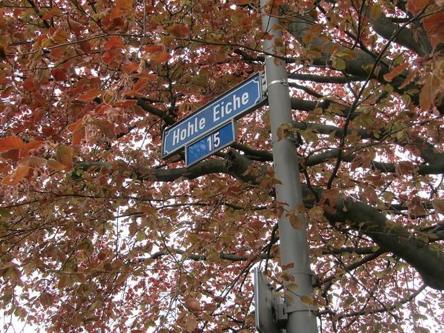 Das ist mal ein schöner Straßenname. Nur das der Baum gar keine Eiche ist, wenn ich nicht irre.