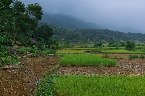 geotagged rice vietnam hagiang