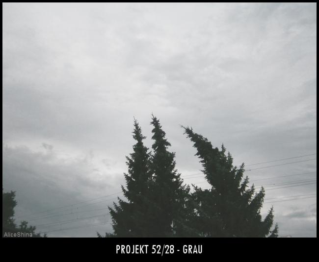 Projekt 52/28 - Grau