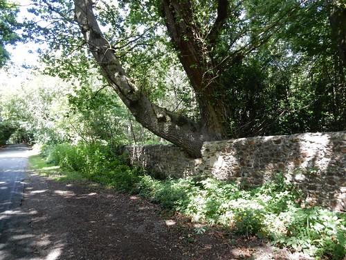 Tree/wall interface