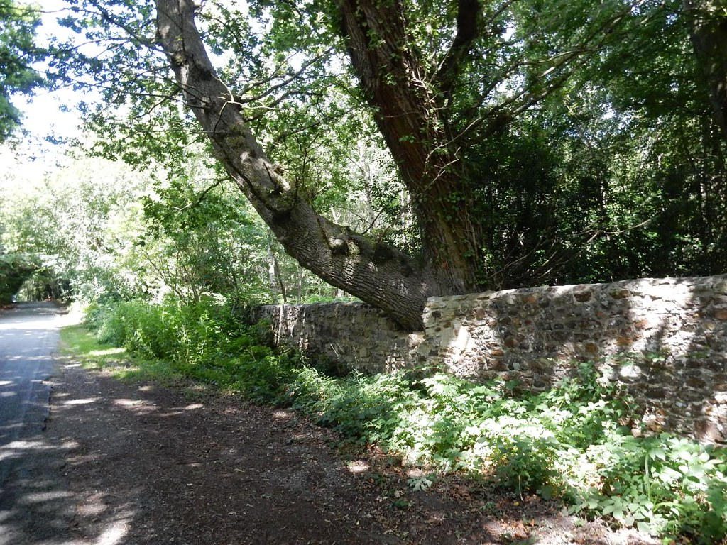 Tree/wall interface Pulborough Circular