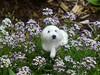 Needle Felted Dog / Custom Pet Portrait / Terrier Mix Alden mini by Gourmet Felted