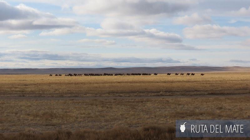 Desierto Gobi Mongolia (27)