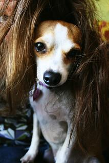 hazel wig