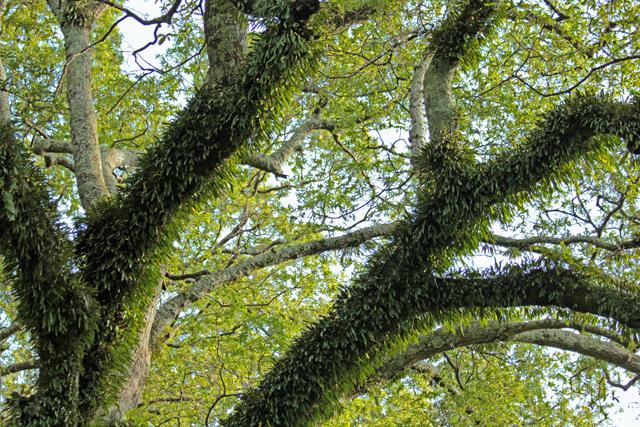 Hairy Trees
