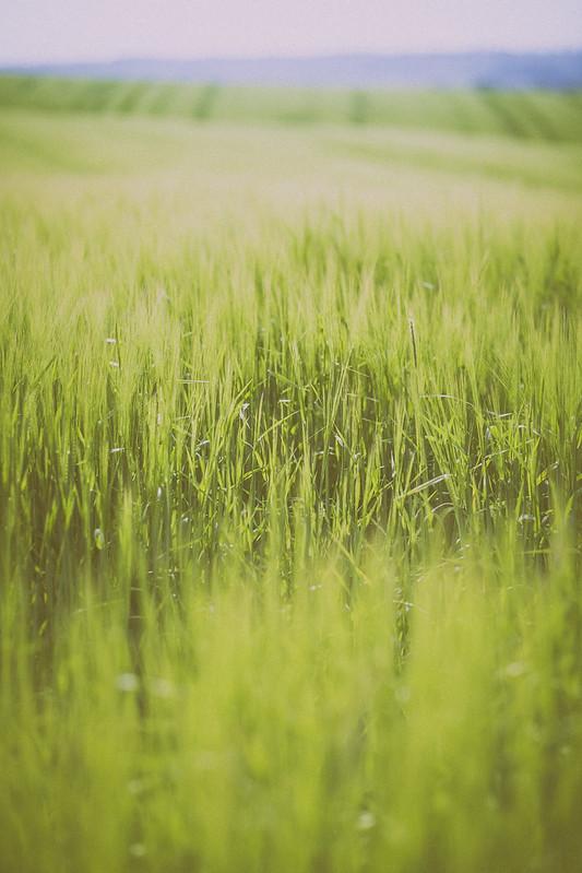 IMAGE: http://farm4.staticflickr.com/3776/9174987227_0ee23cb44f_c.jpg