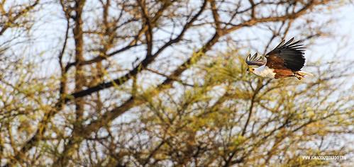 Kenya - Lake Baringo 13