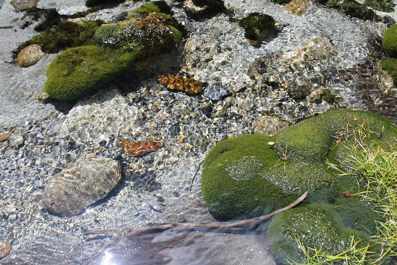 Sparkly stream in Quebrada Shallap