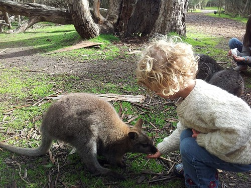 Patting a wallaby.