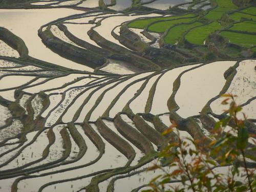 Yunnan13-Yuanyang 1-Duoyishu (60)