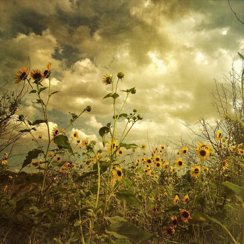 Pawnee Prairie 3 ( series )