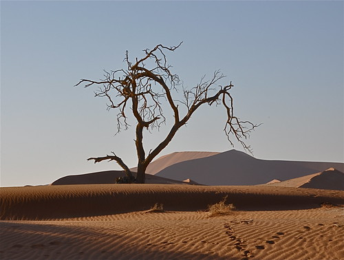 africa nature lightandshadows desert namibia sanddunes desertlandscape autofocus southernafrica namibdesert thegalaxy desertscene redsanddunes powerofart slicesoftime sossusviei oldestdesertintheworld rememberthatmomentlevel1 rememberthatmomentlevel2 inspiringcreativeminds