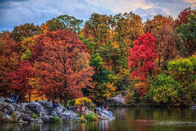Lush Fall Foliage in Central Park