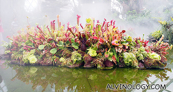 The mist adds to the mystery of the garden at the top of Cloud Forest