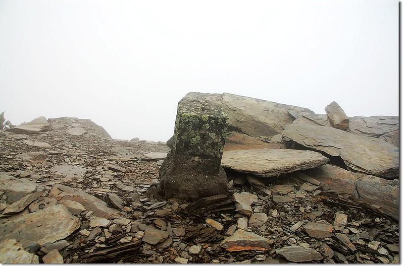 東郡大山森林三角點(Elev. 3619 m) 2