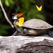 cágado com borboletas by MarceloCamachobv