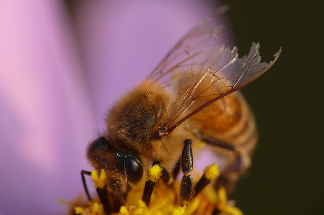 Portrait of a Dying Bee
