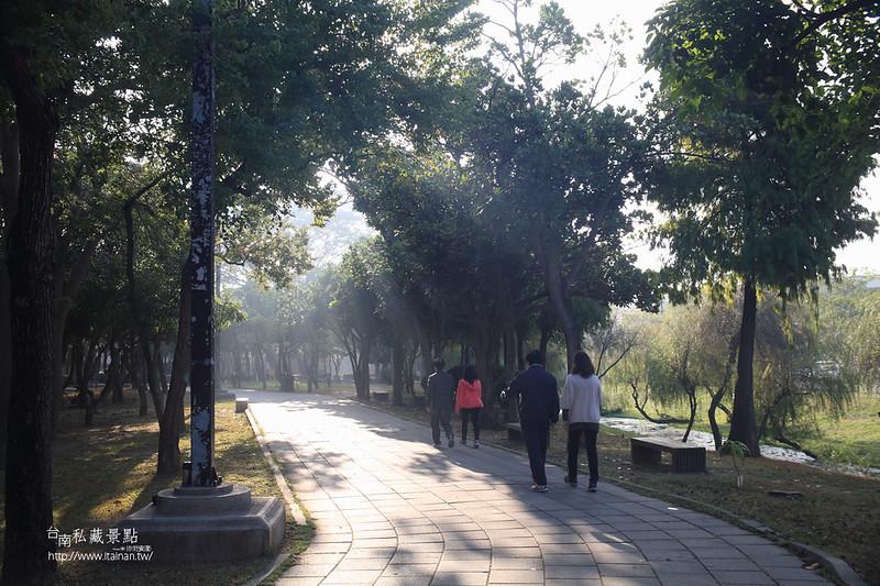 台南私藏景點--巴克禮落羽松 (7)