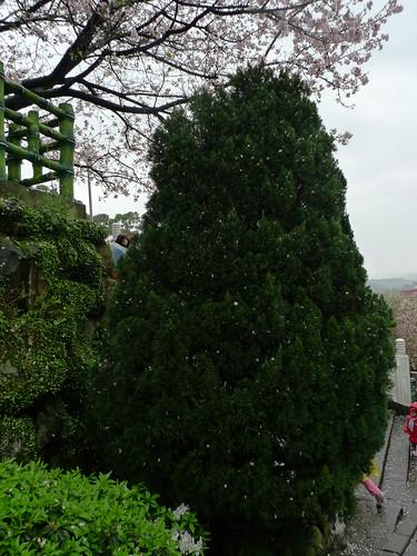 20140309-台北天元宮 (74)