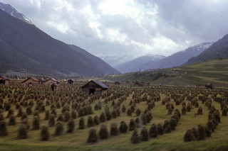 a field of camouflaged Daleks