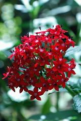 Blooms, Botanical Gardens, Cluj, Romania