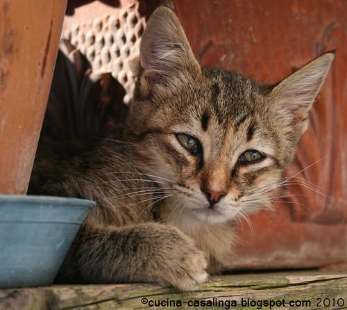 Katzen 3