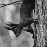 [003] Squirrel Cuteness