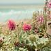 The Coastal Gardener by jillyspoon