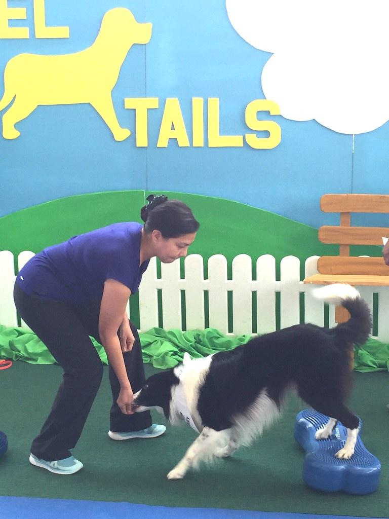 better-dogs-training-school-makati