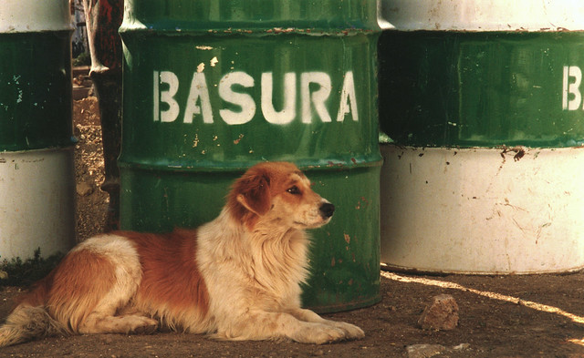 Perro en Panteón Santa Paula, Museo de las Momias; Guanajuato, Mexico (2000)
