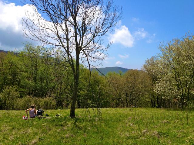 Hike Field
