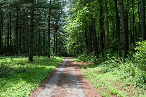 trees forest path delaware blackbirdstateforest blackbirdforest dpsconverge