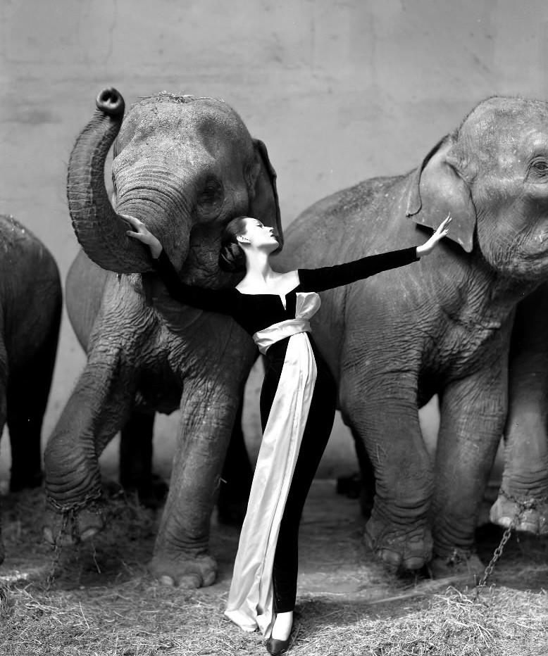 """Richard Avedon, """"Dovima with Elephants"""" (1955)"""