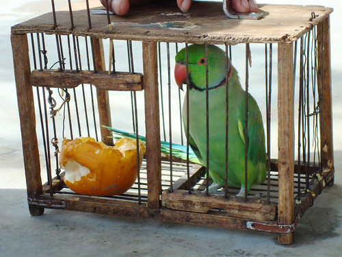 Tarot Parrot