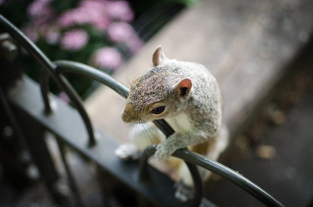 HFF - Squirrel Edition