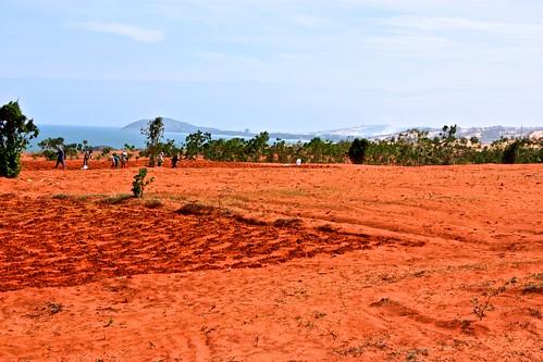 workers prepare a field
