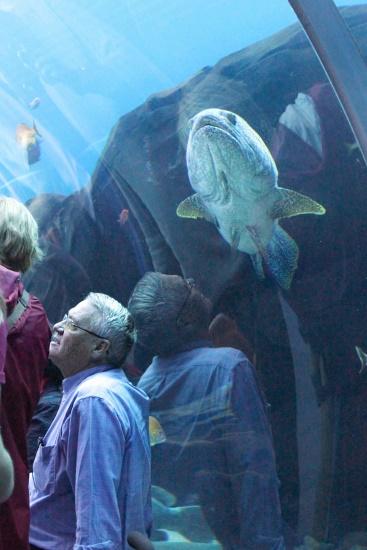 Georgia Aquarium, 3