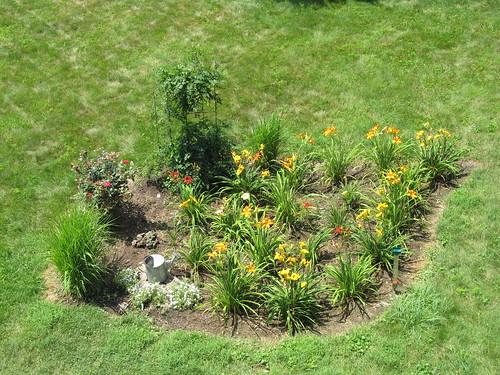 garden daylily birdseyeview daylilies daylilygarden