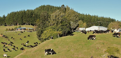 A small Bay of Plenty dairy farm