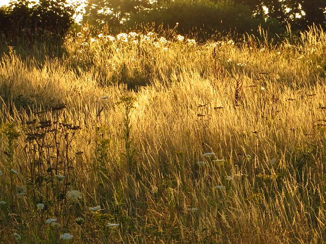 Evening Light on Little Tumulus Field