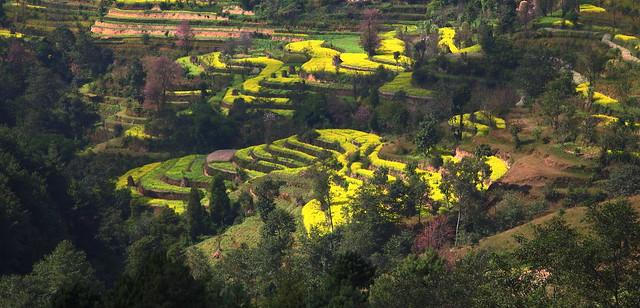 Nepalian Landscape