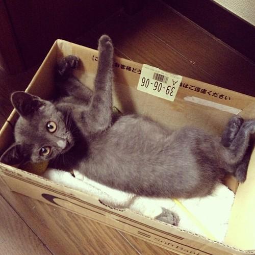 卒業していった、仔猫。箱で寝てたね!#cat