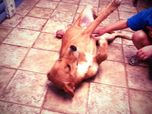 pound pup