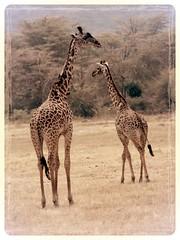 East-African Wildlife